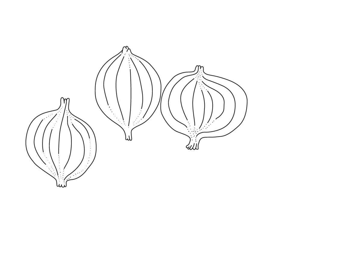 Illustration Zwiebeln
